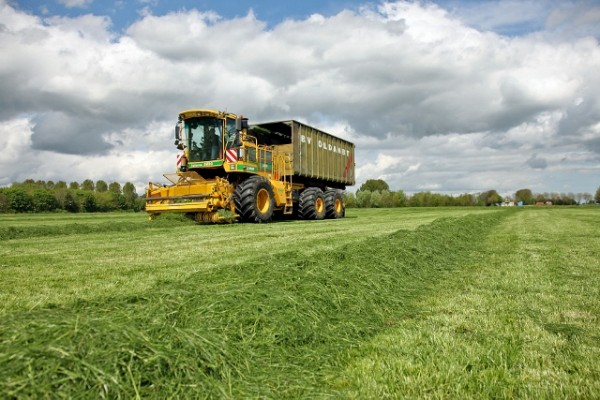 Eerste aanvoer van gras foto: Koos van der Spek